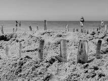 Κοχύλια ξυραφιών που κολλιούνται στην άμμο μια ηλιόλουστη ημέρα Στοκ εικόνα με δικαίωμα ελεύθερης χρήσης