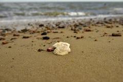 Κοχύλια, πέτρες, άμμος Στοκ Φωτογραφίες