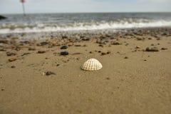 Κοχύλια, πέτρες, άμμος Στοκ εικόνα με δικαίωμα ελεύθερης χρήσης