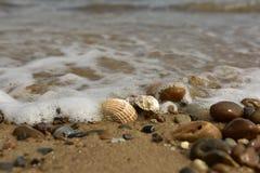 Κοχύλια, πέτρες, άμμος Στοκ Εικόνες