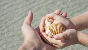 Κοχύλια στα χέρια στο υπόβαθρο της θάλασσας Στοκ φωτογραφίες με δικαίωμα ελεύθερης χρήσης