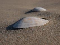 Κοχύλια στην άμμο Στοκ Εικόνα