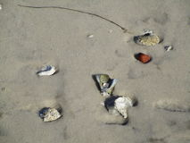 Κοχύλια στην άμμο Στοκ εικόνα με δικαίωμα ελεύθερης χρήσης