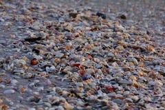 Κοχύλια στην ακτή Στοκ φωτογραφία με δικαίωμα ελεύθερης χρήσης