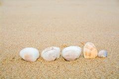 Κοχύλια στην παραλία άμμου Στοκ εικόνες με δικαίωμα ελεύθερης χρήσης