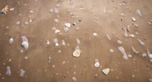 Κοχύλια στην παραλία που πλένεται από ένα κύμα Στοκ φωτογραφίες με δικαίωμα ελεύθερης χρήσης