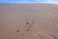Κοχύλια στην παραλία Στοκ Εικόνα
