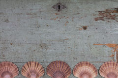 Κοχύλια στην παλαιά ξύλινη κορυφή στοκ εικόνες