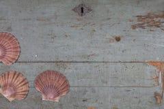 Κοχύλια στην παλαιά ξύλινη κορυφή στοκ εικόνα με δικαίωμα ελεύθερης χρήσης