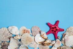 Κοχύλια στους παλαιούς μπλε ξύλινους πίνακες στοκ φωτογραφία με δικαίωμα ελεύθερης χρήσης