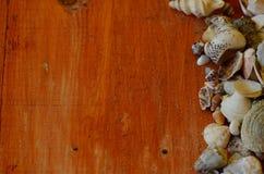 Κοχύλια στο καφετί ξύλινο υπόβαθρο Στοκ Φωτογραφία