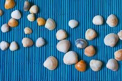 Κοχύλια στο μπλε χαλί μπαμπού Στοκ Εικόνα