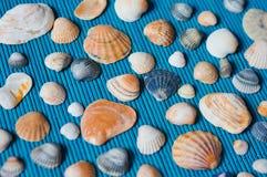 Κοχύλια στο μπλε χαλί μπαμπού Στοκ εικόνες με δικαίωμα ελεύθερης χρήσης