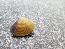 Κοχύλια στο πάτωμα πετρών Στοκ Φωτογραφίες