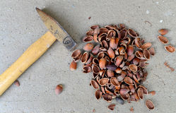κοχύλια σφυριών και καρυδιών Στοκ εικόνες με δικαίωμα ελεύθερης χρήσης
