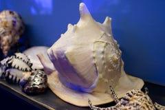 Κοχύλια της θάλασσας καρκινοειδή στο μουσείο Στοκ Φωτογραφίες