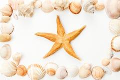 Κοχύλια Conch στοκ φωτογραφία με δικαίωμα ελεύθερης χρήσης