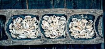 Κοχύλια Cowry χρημάτων Στοκ φωτογραφία με δικαίωμα ελεύθερης χρήσης