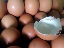 Κοχύλι αυγών Στοκ Φωτογραφία