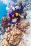 Κοχύλι θάλασσας και δύτης σκαφάνδρων, Μαλδίβες στοκ εικόνα με δικαίωμα ελεύθερης χρήσης