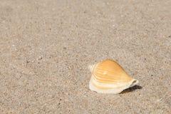 Κοχύλι θάλασσας με την άμμο ως υπόβαθρο Στοκ εικόνα με δικαίωμα ελεύθερης χρήσης
