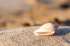 Κοχύλι θάλασσας παραλιών άμμου Στοκ εικόνες με δικαίωμα ελεύθερης χρήσης