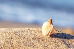 Κοχύλι θάλασσας παραλιών άμμου Στοκ Εικόνα