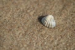 Κοχύλι θάλασσας που βρίσκεται στην παραλία στοκ φωτογραφίες με δικαίωμα ελεύθερης χρήσης