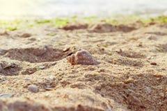 Κοχύλι θάλασσας σε μια αμμώδη παραλία ενάντια στη θάλασσα Στοκ Εικόνες