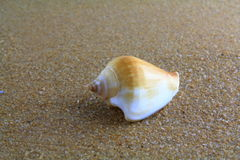 Κοχύλι θάλασσας στην άμμο Στοκ φωτογραφία με δικαίωμα ελεύθερης χρήσης