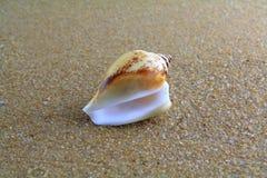 Κοχύλι θάλασσας στην άμμο Στοκ εικόνα με δικαίωμα ελεύθερης χρήσης