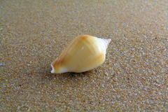 Κοχύλι θάλασσας στην άμμο Στοκ Εικόνες