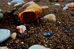 Κοχύλι θάλασσας στην παραλία Στοκ Εικόνες