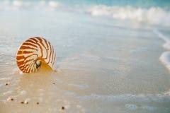 Κοχύλι θάλασσας Nautilus στη χρυσή παραλία άμμου στο μαλακό φως ηλιοβασιλέματος Στοκ εικόνα με δικαίωμα ελεύθερης χρήσης