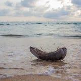 Κοχύλι καρύδων στην παραλία Στοκ εικόνα με δικαίωμα ελεύθερης χρήσης