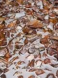Κοχύλι καρύδων στοκ εικόνες