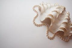 Κοχύλι μαργαριταριών στοκ εικόνα με δικαίωμα ελεύθερης χρήσης