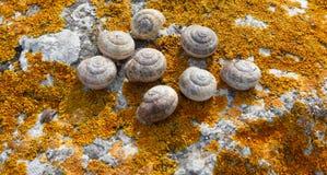 Κοχύλι σαλιγκαριών σε έναν βράχο που καλύπτεται με το πορτοκάλι λειχήνων βρύου Στοκ φωτογραφία με δικαίωμα ελεύθερης χρήσης