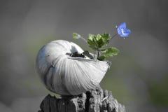κοχύλι στο λουλούδι Thé Στοκ φωτογραφίες με δικαίωμα ελεύθερης χρήσης