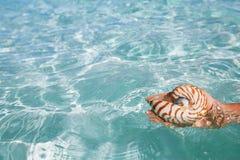 Κοχύλι Nautilus διαθέσιμο και μπλε κύματα θάλασσας Στοκ εικόνες με δικαίωμα ελεύθερης χρήσης