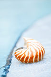Κοχύλι Nautilus στην άκρη πισινών θερέτρου Στοκ Εικόνες