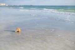 Κοχύλι Nautilus στην άσπρη άμμο παραλιών της Φλώριδας κάτω από το φως ήλιων Στοκ Φωτογραφίες