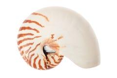 Κοχύλι Nautilus στο λευκό, πορεία ψαλιδίσματος στοκ εικόνες