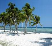 Κούβα Στοκ εικόνες με δικαίωμα ελεύθερης χρήσης