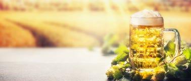 Κούπα της μπύρας με τον αφρό στον πίνακα με τους λυκίσκους στο υπόβαθρο φύσης τομέων με την ηλιαχτίδα, μπροστινή άποψη Στοκ Εικόνες