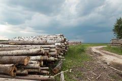Κούτσουρα δέντρων περικοπών που συσσωρεύονται Στοκ Εικόνες