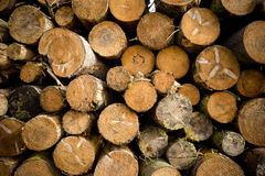 Κούτσουρα δέντρων που συσσωρεύονται Στοκ φωτογραφίες με δικαίωμα ελεύθερης χρήσης
