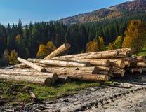 Κούτσουρα δέντρων Στοκ Φωτογραφία