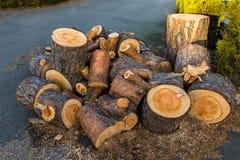 Κούτσουρα ξύλου πεύκων από ένα δέντρο πεύκων που βρίσκονται σε έναν σωρό στο έδαφος Στοκ εικόνα με δικαίωμα ελεύθερης χρήσης