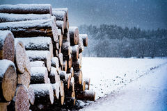 Κούτσουρα που καλύπτονται ξύλινα στο χιόνι Στοκ Εικόνα